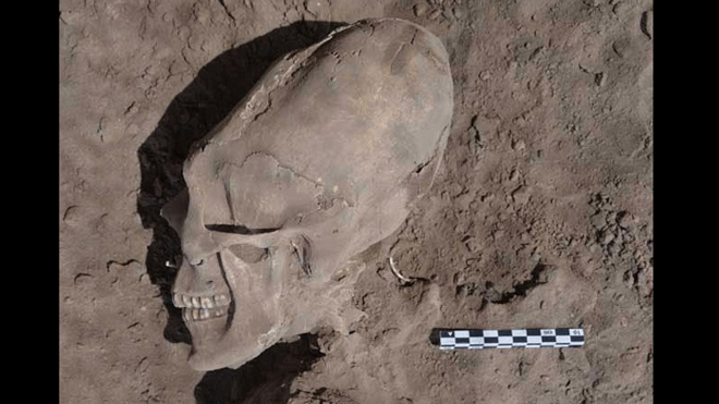 An oblong skull unearthed at the village of Onavas in Mexico.