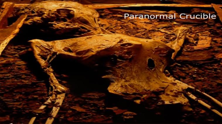 petrie mummia