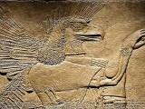 sumer2225 pred