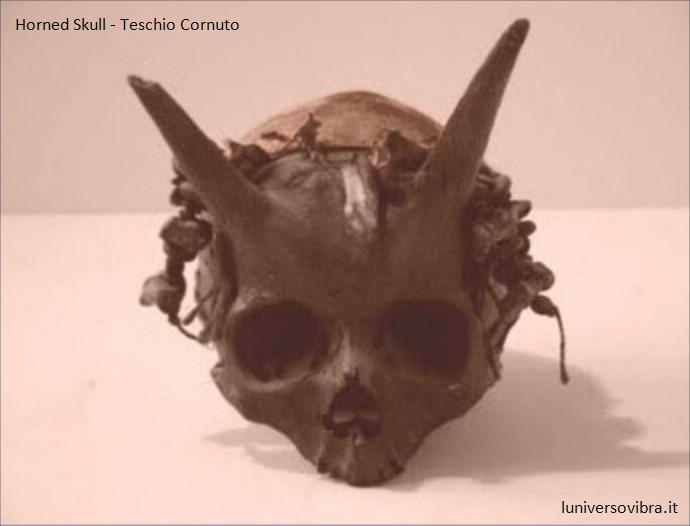horned skull 690x526
